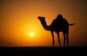 Kisah Orang Arab Badui Ingin Naik Haji dan Diberi Wasiat oleh Rasulullah SAW Lewat Mimpi