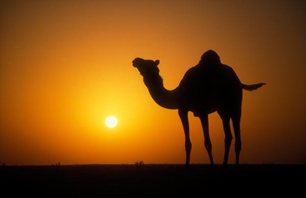 Kisah Nabi Saleh dan Unta Betina