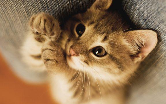 Kisah Seorang Sufi dan Kucing yang Malang