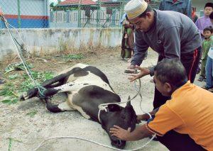 Merayakan Idul Adha bersama Søren Kierkegaard