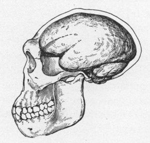 Saya Bukan Pribumi Keturunan Pitechantropus Mojokertoensis