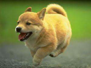 Ini 10 Sifat Anjing yang Perlu Ditiru Menurut Syaikh Nawawi