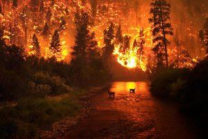 Kisah Abu Darda dan Dzikir yang Menyelamatkan dari Kebakaran