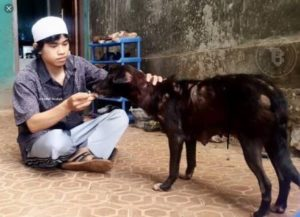 Kisah Lelaki Membawa Air dengan Sepatunya untuk Memberi Minum Anjing