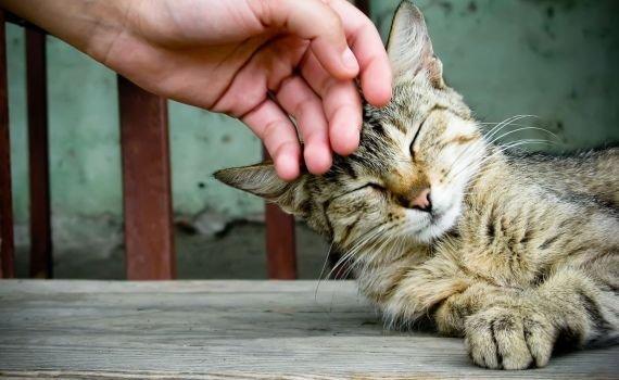 Apakah Kucing Najis? Ini Penjelasan Ulama