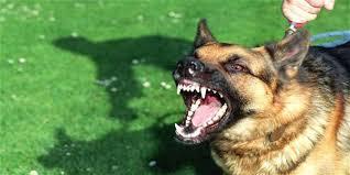 Gigitan Anjing Milik Orang Munafik