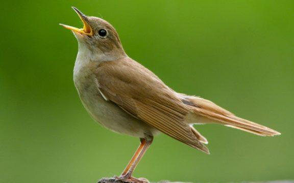 Kisah Sufyan Ats Tsauri dan Burung Kesayangannya