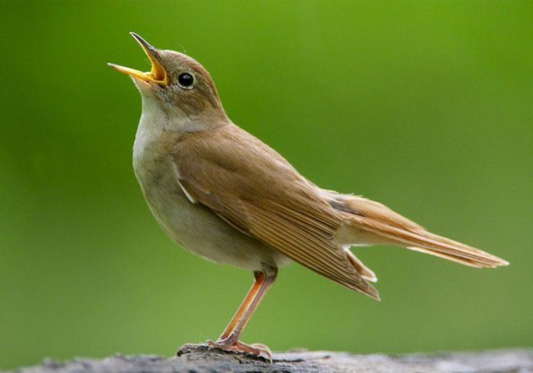 Surat Al-Fiil Ayat 3: Apa yang Menghancurkan Abraha, Burung Ababil, Nyamuk atau Lalat?