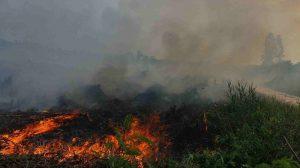 Tragedi Karhutla, Saatnya Kita Jihad Menjaga Lingkungan