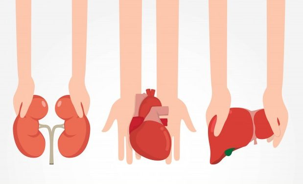 Hukum Donor Organ Tubuh Manusia