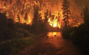 Protes Warga Hutan kepada Umat Manusia