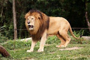 Keajaiban Sedekah, Seorang Anak Selamat dari Ancaman Binatang Buas