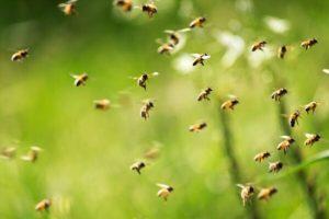 Kisah Jenazah Dilindungi Lebah